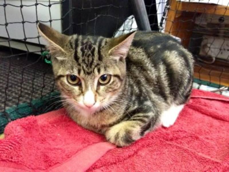 Baxter, male, 3 months (Gladesville)
